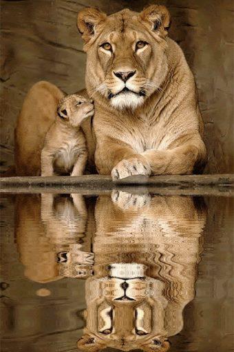 Relective Lions