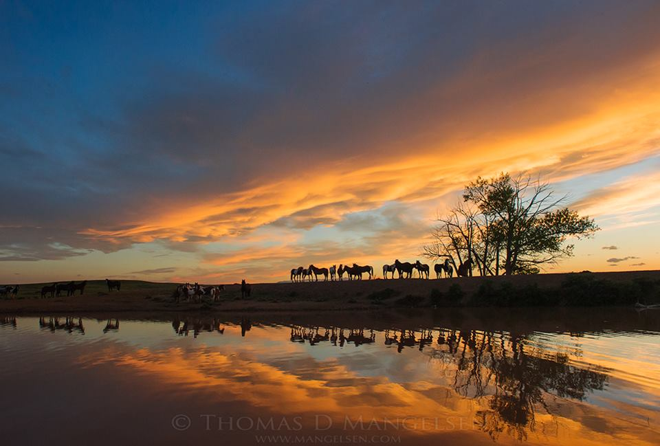 horses reflection