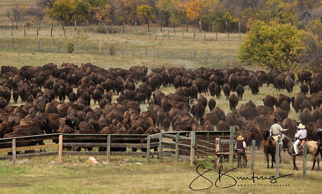 all-buffalo